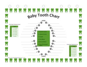 Teeth_Chart