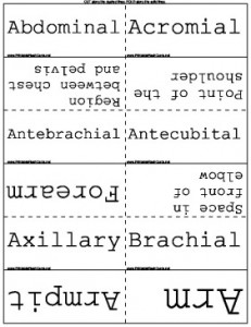 Anatomical_Terms